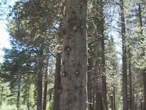 trees300.jpg