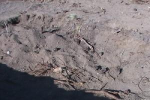 snowcreek_7_archeological_site.jpg