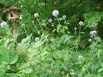unweeded_garden