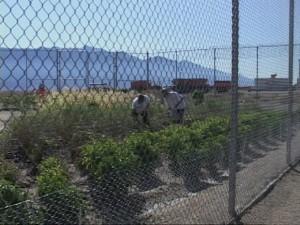 garden-inmates