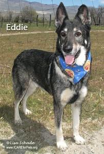 dog-eddie