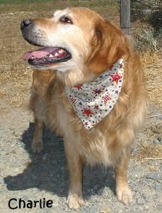 dog-charlie