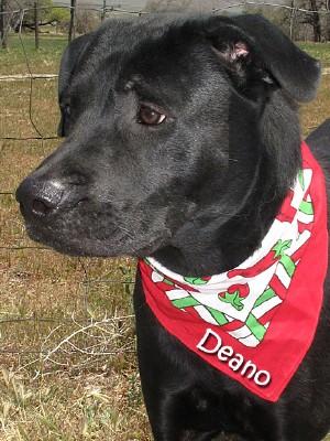 dog-deano