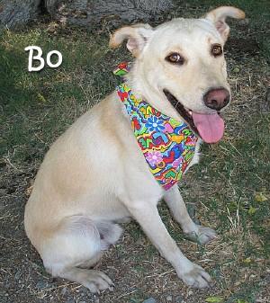 dog-bo