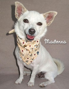 dog-madonna