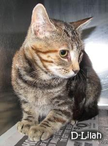 cat-delilah