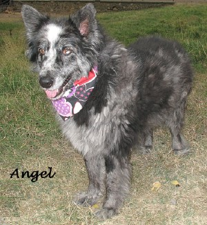 dog-angel