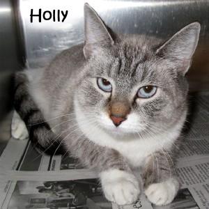 cat_holly