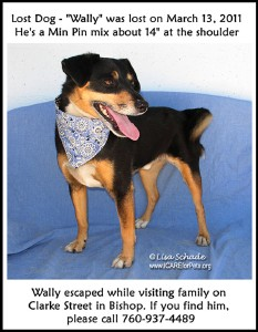 dogwally