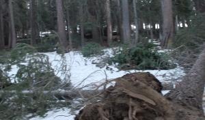 treesdown