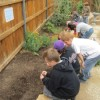 Students planting their seeds at the ESLT garden