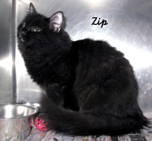 12-12-08 One of 5 kittens ZIP B ID12-05-043 - FACEBOOK