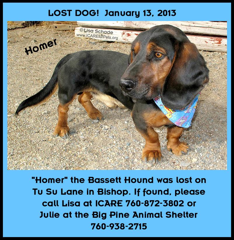 12-11-21 Bassett Hound 1 yr unneut male HOMER 3 ID12-11-017 - LOST POSTER FACEBOOK