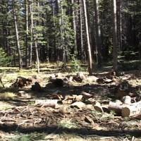 firewood (1)