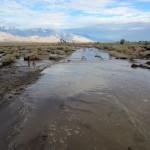 Manzanar-auto-tour-road-flooded-2