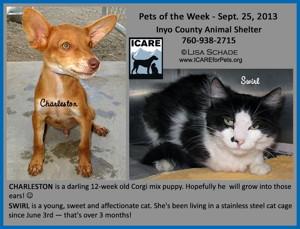 13-09-07 Corgi mix male puppy CHARLESTON 1 ID13-09-005 & SWIRL B&W cat ID13-06-037  - FACEBOOK