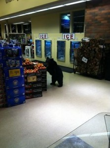 Photo of bear in Vons went viral on Facebook.