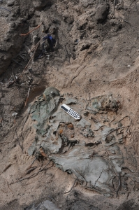 Remains of Marine uncovered in detected location.