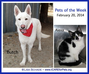 14-02-14 BUTCH White German Shepherd neut male 1 yr ID14-02-012 & ALEXA B&W fem cat ID13-11-023 - KSRW