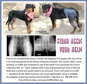 14-07-25 Rottweiler mix puppy 6 mo fem 2 ID14-07-034 - HBC 7-17 W Line LEFT & RIGHT FACEBOOK LARGE