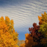 Photo courtesy of Andrew Kirk - Fall colors, Lone Pine